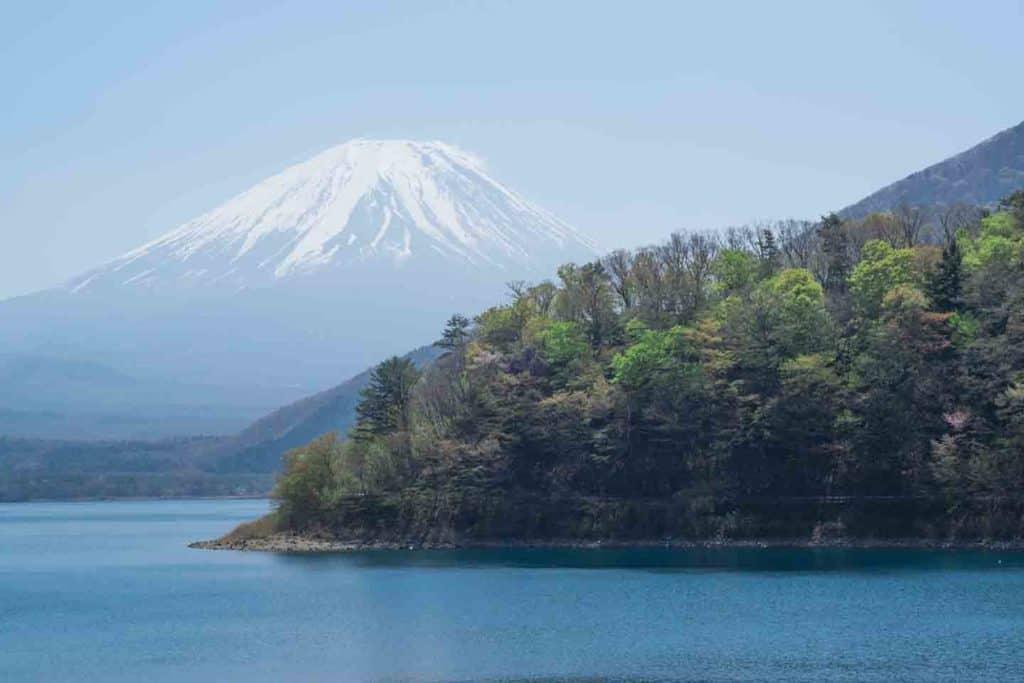 wooded headland lake motosu mt fuji